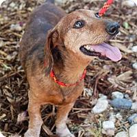 Adopt A Pet :: RUSTY URGENT - Sacramento, CA