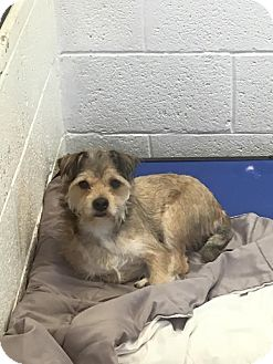 Terrier (Unknown Type, Medium) Mix Dog for adoption in Miami, Florida - Manny