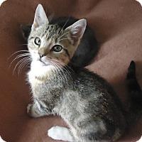 Adopt A Pet :: Troy - Riverside, RI