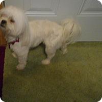 Adopt A Pet :: Zoey - Kannapolis, NC