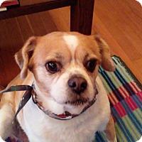 Adopt A Pet :: Sadie - Sharonville, OH