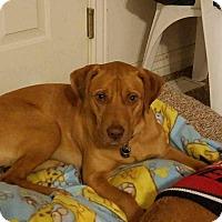 Adopt A Pet :: Sam - Ogden, UT