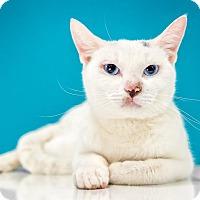 Adopt A Pet :: Mr. Jingles - Chandler, AZ