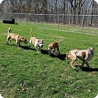 Adopt A Pet :: Uber - Delaware, OH