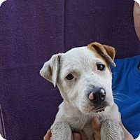 Adopt A Pet :: Bella - Oviedo, FL