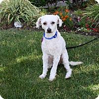 Adopt A Pet :: REES - Newport Beach, CA