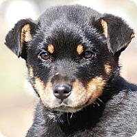 Adopt A Pet :: Bear - Providence, RI