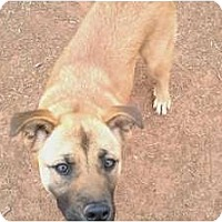 Adopt A Pet :: Sadie in OK - Oklahoma City, OK