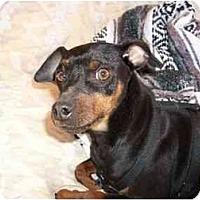 Adopt A Pet :: Joel - Phoenix, AZ