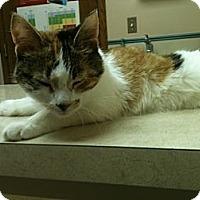 Adopt A Pet :: Alyssa - Warren, MI