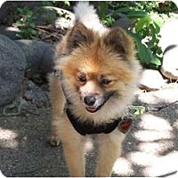 Adopt A Pet :: KONA KAI - Hesperus, CO