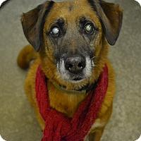 Adopt A Pet :: Bradley - Lake Odessa, MI