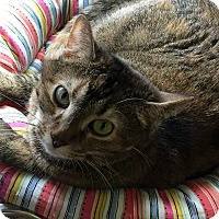 Adopt A Pet :: Patches - Topeka, KS