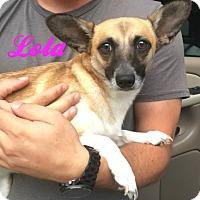 Adopt A Pet :: Lady - Muskegon, MI