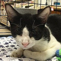 Adopt A Pet :: Jareth - Spring, TX