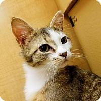 Adopt A Pet :: Alex (kitten) - Watsontown, PA