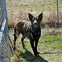 Adopt A Pet :: Bruce - Justin, TX