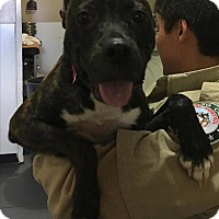 Adopt A Pet :: 17-03-0788 Harley - Dallas, GA