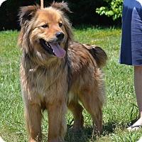 Adopt A Pet :: Tanner#1-adopt pending - Sparta, NJ