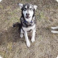 Adopt A Pet :: Ace - Egremont, AB