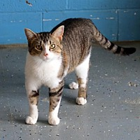 Adopt A Pet :: Mack - Bardstown, KY