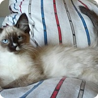 Adopt A Pet :: Herra - North Highlands, CA