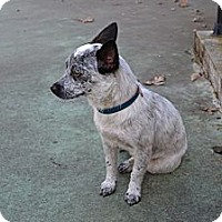 Adopt A Pet :: DAISY-LOVES EVERYONE!!! - Bluff city, TN