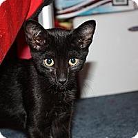 Adopt A Pet :: Aladdin (LE) - Little Falls, NJ