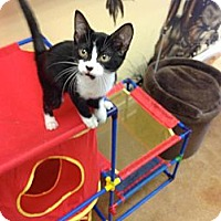 Adopt A Pet :: Holt - Lake Charles, LA