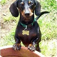 Adopt A Pet :: Bubba - San Jose, CA