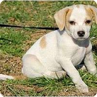 Adopt A Pet :: Della - Staunton, VA