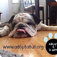 Adopt A Pet :: Calli - Chicago, IL