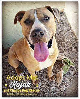 Boxer/American Pit Bull Terrier Mix Dog for adoption in Queen Creek, Arizona - Kojak
