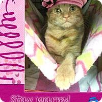 Adopt A Pet :: Cailin - East Brunswick, NJ