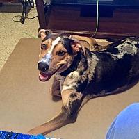 Adopt A Pet :: Benji - Cape Coral, FL