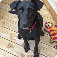 Adopt A Pet :: Maddie - San Francisco, CA