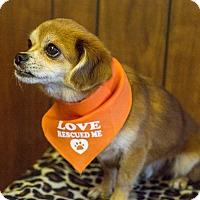 Adopt A Pet :: Felix - Tavares, FL