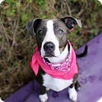 Adopt A Pet :: Dixie - Lakeland, FL