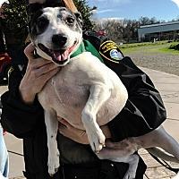 Adopt A Pet :: RIPPER - Chico, CA
