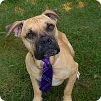 Adopt A Pet :: BRUCE - Houston, TX