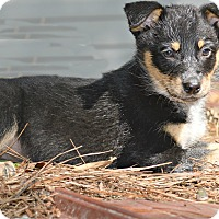 Adopt A Pet :: Hazel - Glastonbury, CT