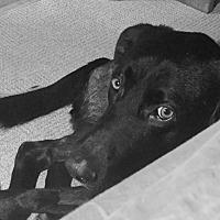 Adopt A Pet :: Cello - Phoenix, AZ