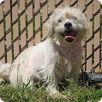 Adopt A Pet :: *SALT - Norco, CA