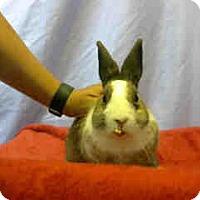 Adopt A Pet :: URGENT NOW @ DEVORE SHELTER - San Bernardino, CA