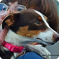 Adopt A Pet :: Elizabeth - in Maine - kennebunkport, ME