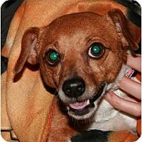 Adopt A Pet :: Chance in Houston - Houston, TX