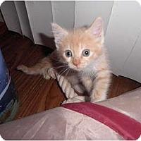Adopt A Pet :: Astro - Warren, MI