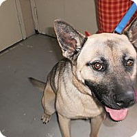 Adopt A Pet :: Oscar - Wallaceburg, ON