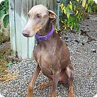Adopt A Pet :: Nilla - New Richmond, OH
