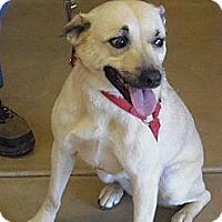 Adopt A Pet :: Whiskey - Wickenburg, AZ